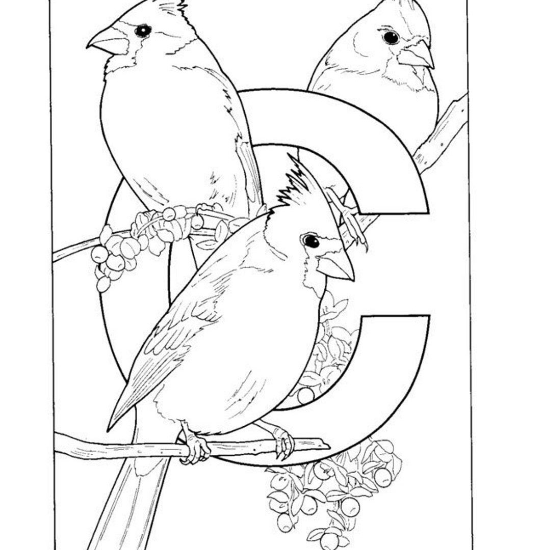 Arizona Cardinals Coloring Pages Printable 18o - Free Download
