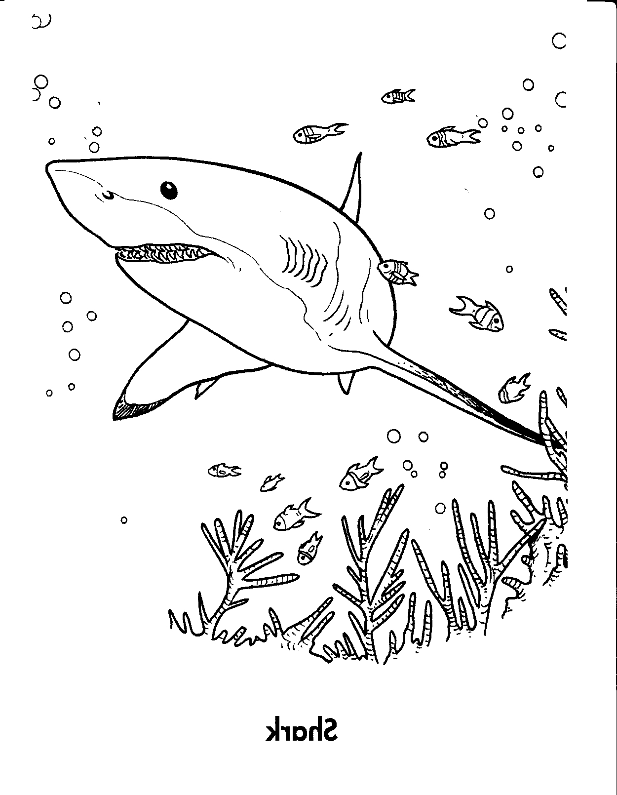 Great White Shark Coloring Pages 4creative Gallery Free Books Of Best Page To