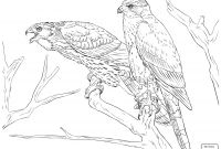 Coloring Pages Birds - Hawk Coloring Pages Birds Prey Coloring Pages Hawk Coloring Pages to Print