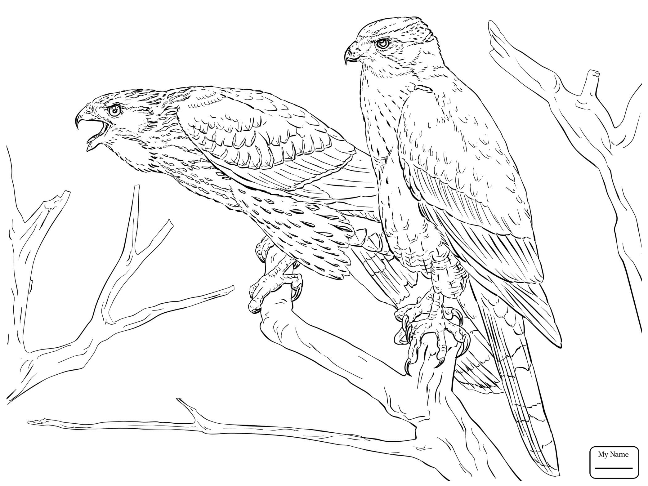 Coloring pages birds collection free coloring sheets for Birds of prey coloring pages