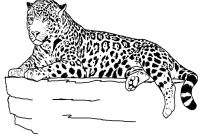 Animals Coloring Pages to Print - Immediately Cheetah to Color Coloring Unknown Collection