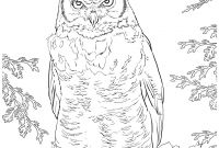 Coloring Pages Birds - Innovative Great Horned Owl Coloring Page Birds Pages Coloring7 Download