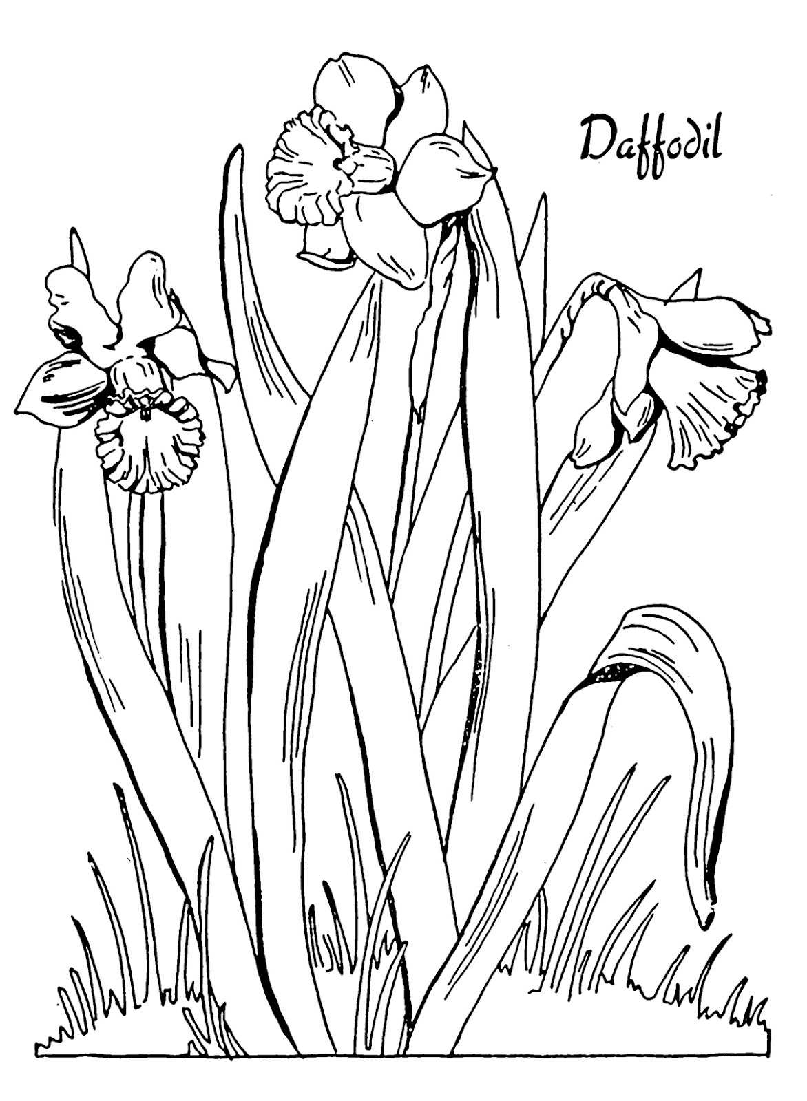 Kids Printable Daffodil Coloring Page the Graphics Fairy Download Of New Daffodil Flower Coloring Pages Collection Printable