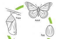 Monarch butterfly Coloring Pages - Life Cycle Of A Monarch butterfly Coloring Page Download