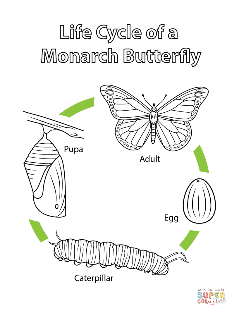 Life Cycle Of A Monarch butterfly Coloring Page Download Of Detailed Coloring Pages for Adults Collection