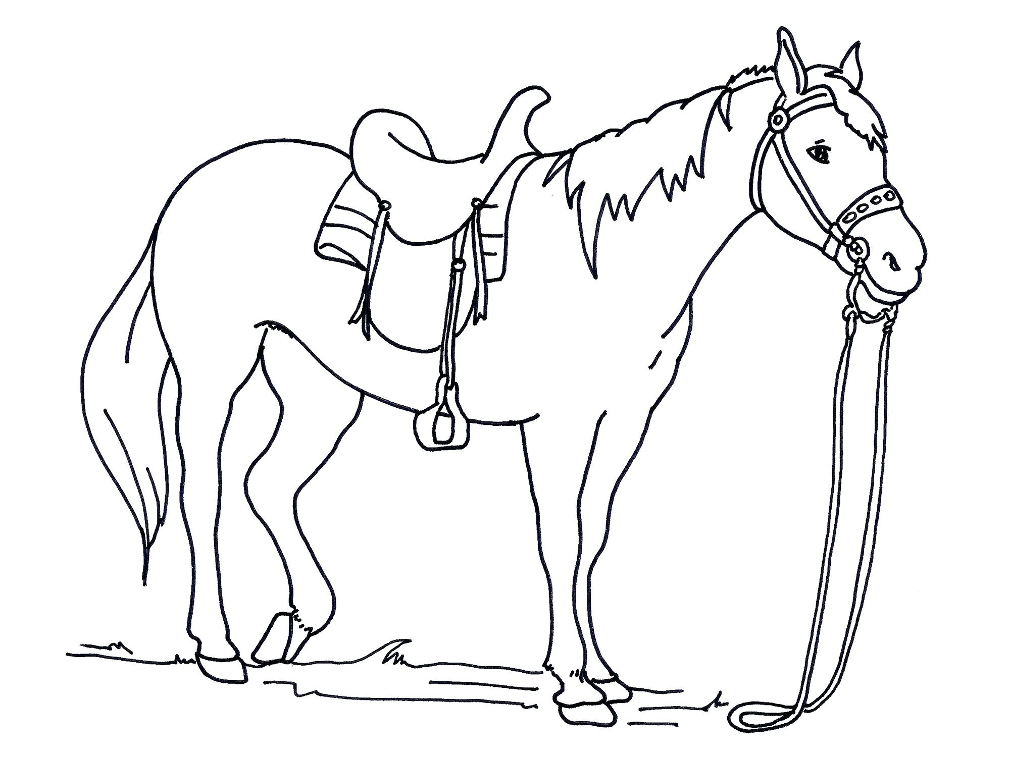 Lifetime Horse Color Sheet Coloring Pages Hors Unknown Gallery Of Sturdy Coloring Page A Horse Pages Horses R 3353 Unknown Download