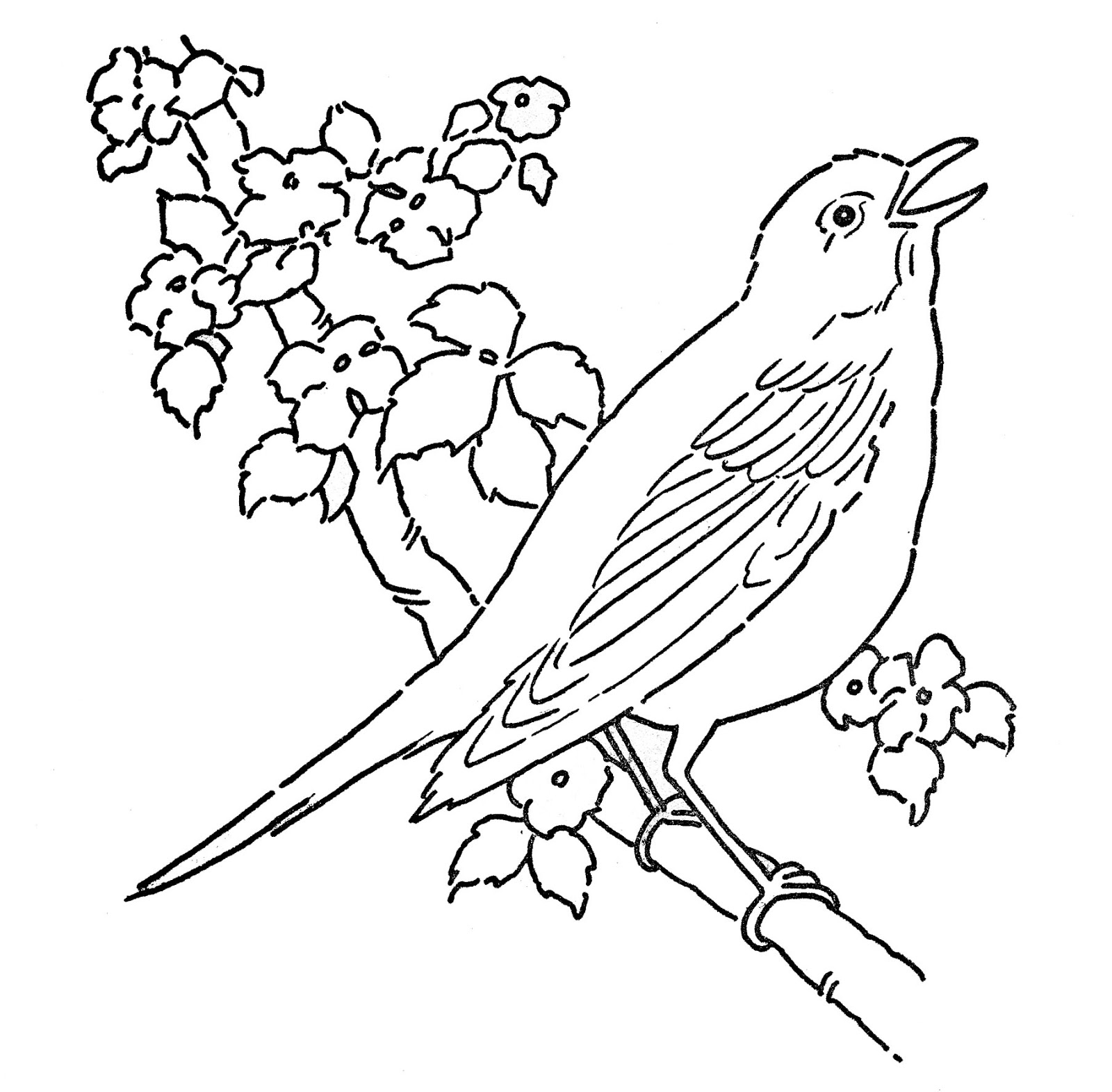 Coloring Pages Birds Collection 5c - Save it to your computer