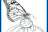 Monarch butterfly Coloring Pages - Marvelous Coloring Page Monarch butterfly Well Printable Pict Printable