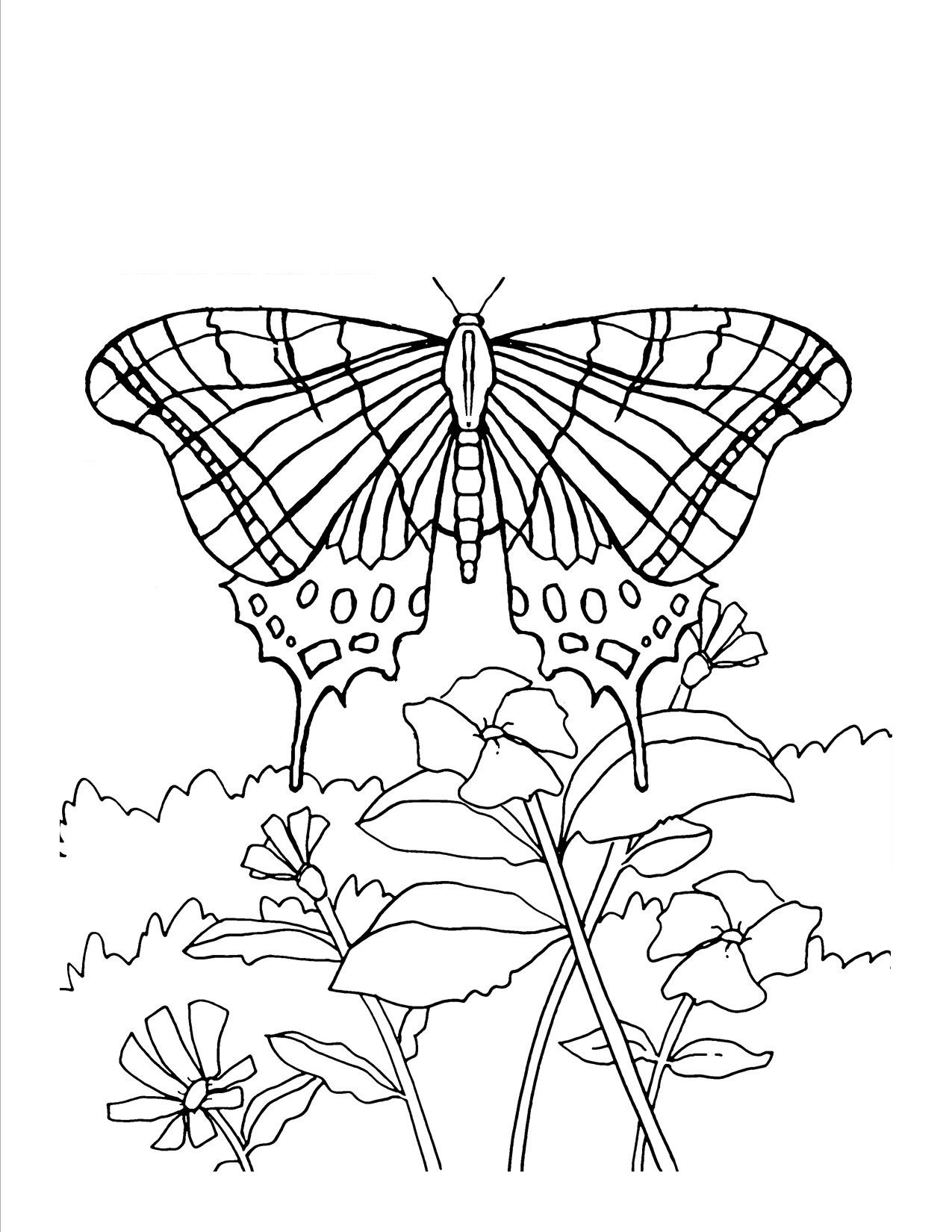 Monarch butterflies Coloring Page Monarch butterfly Download Free Download Of Detailed Coloring Pages for Adults Collection