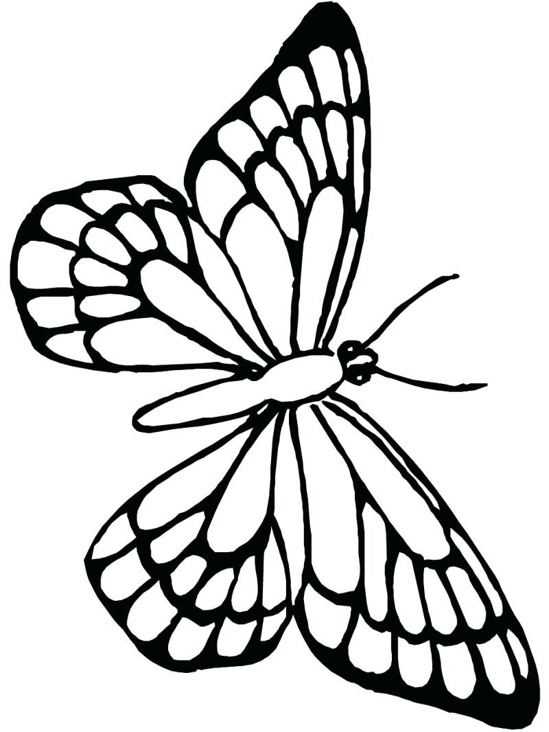 Monarch butterfly Coloring Page Best butterfly Printable Coloring Download Of Detailed Coloring Pages for Adults Collection