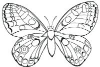 Monarch butterfly Coloring Pages - Monarch butterfly Coloring Page Luxury Cartoon butterflies Many Download
