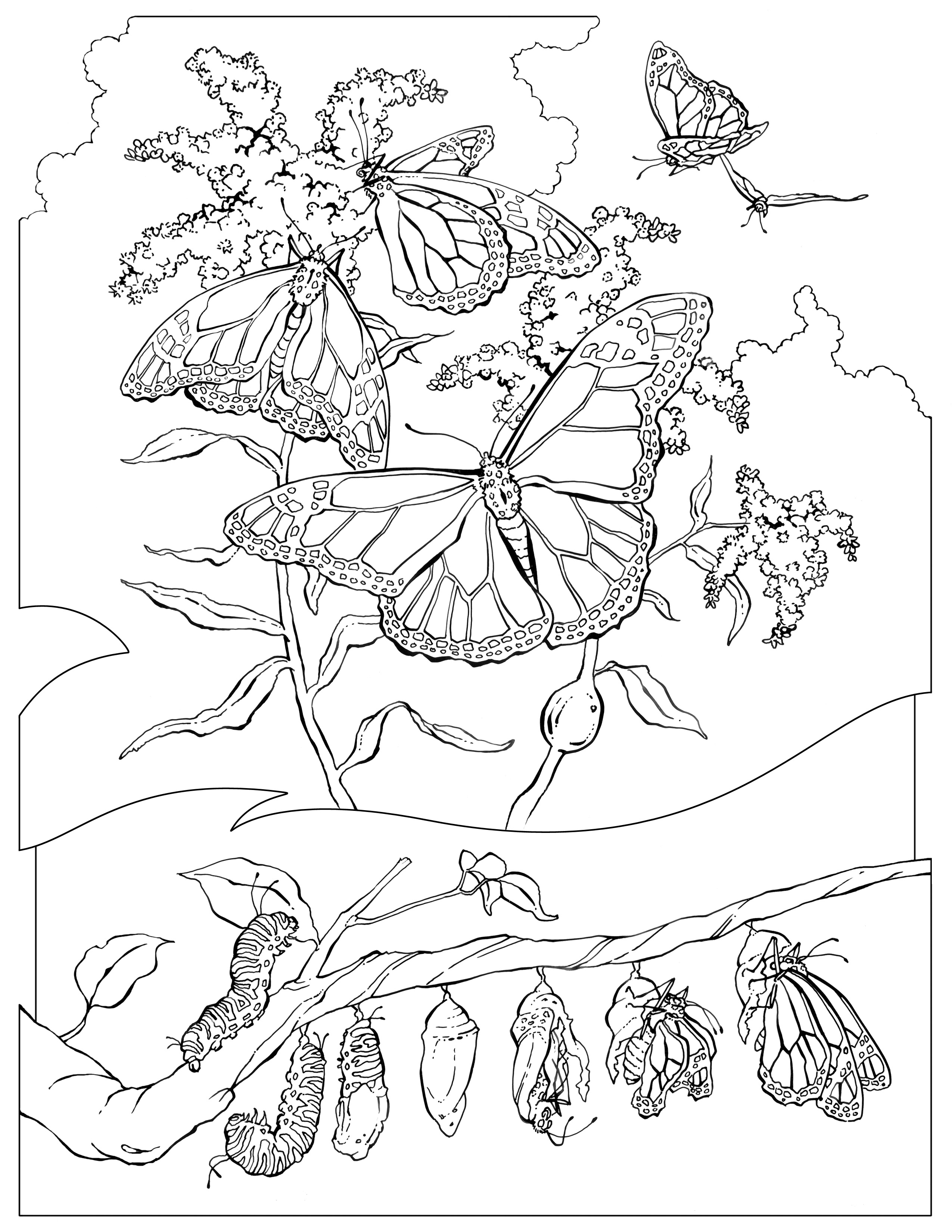 Monarch butterfly Coloring Page National Geographic Kids Coloring Gallery Of Detailed Coloring Pages for Adults Collection
