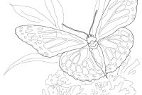 Monarch butterfly Coloring Pages - Monarch butterfly Coloring Page Printable