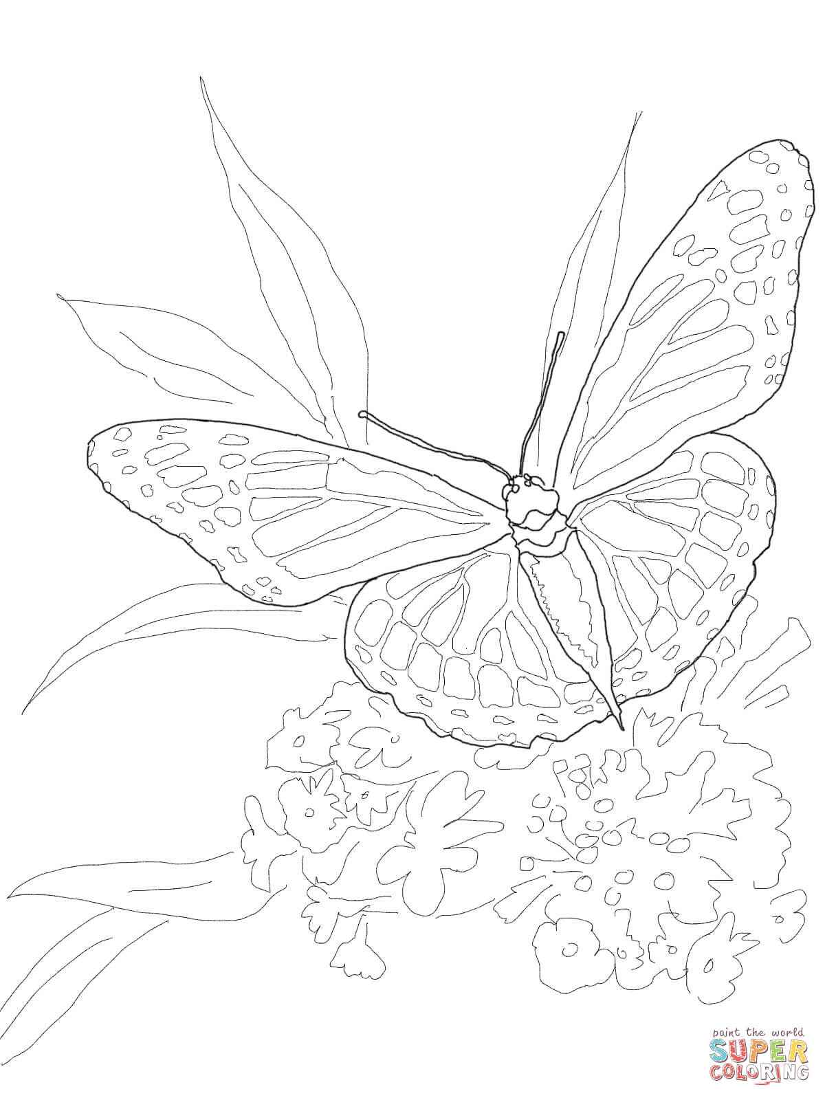 monarch butterfly coloring page printable