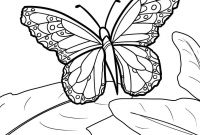 Monarch butterfly Coloring Pages - Monarch butterfly Coloring Pages and Print for Free Printable