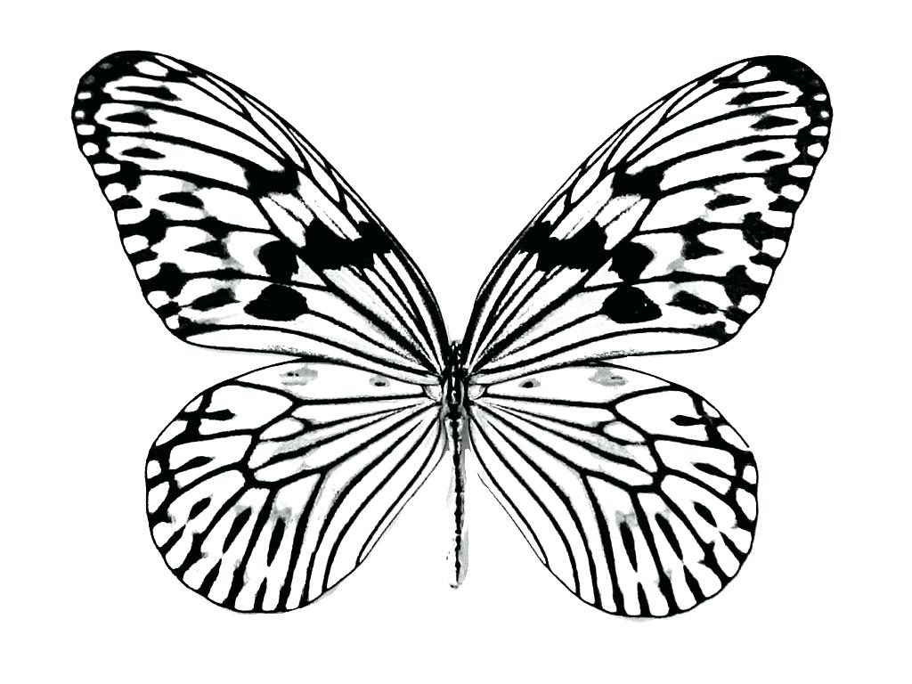 monarch butterfly coloring pages coloring page monarch butterfly printable