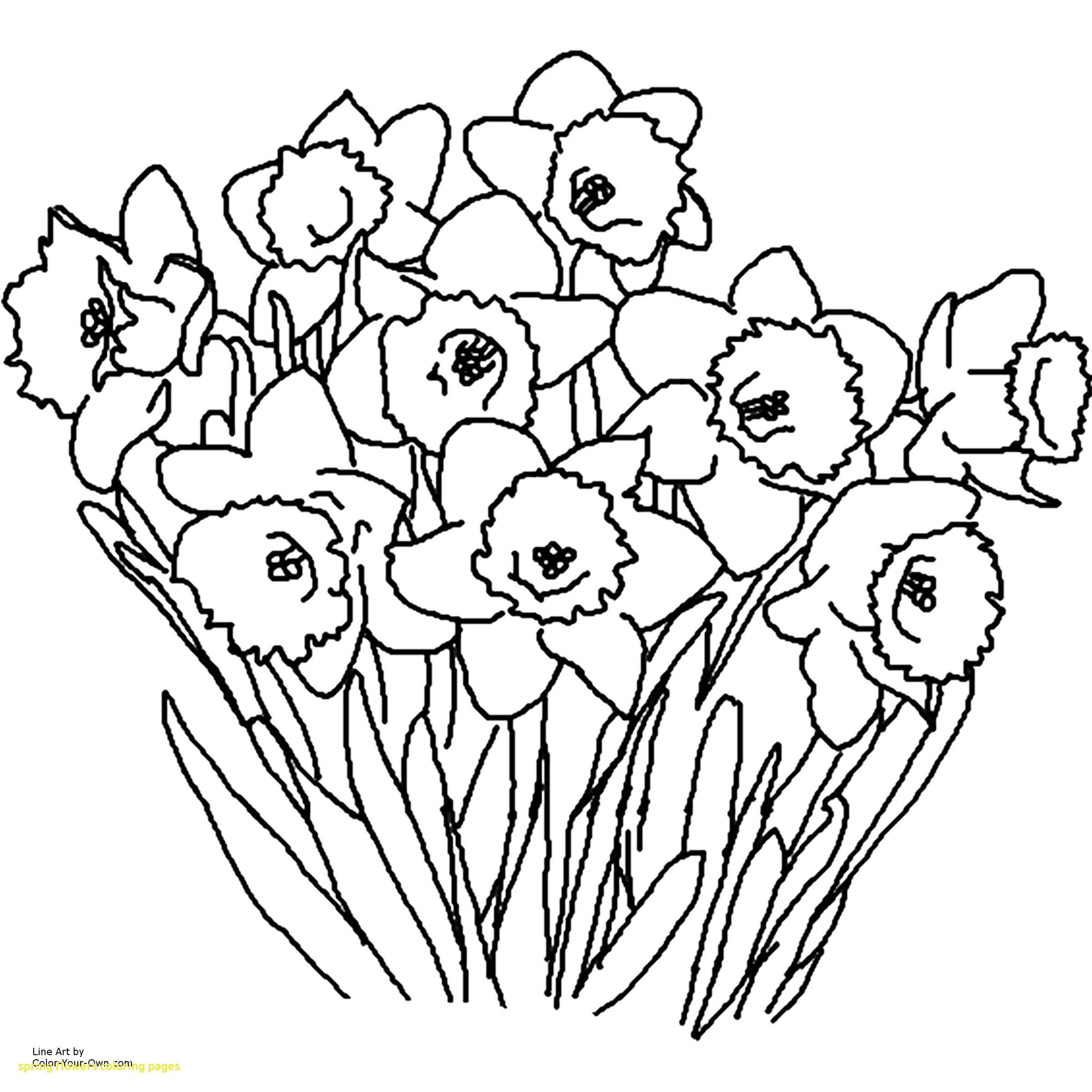 New Daffodil Flower Coloring Pages Collection Printable Of Daffodil Coloring Pages Gallery