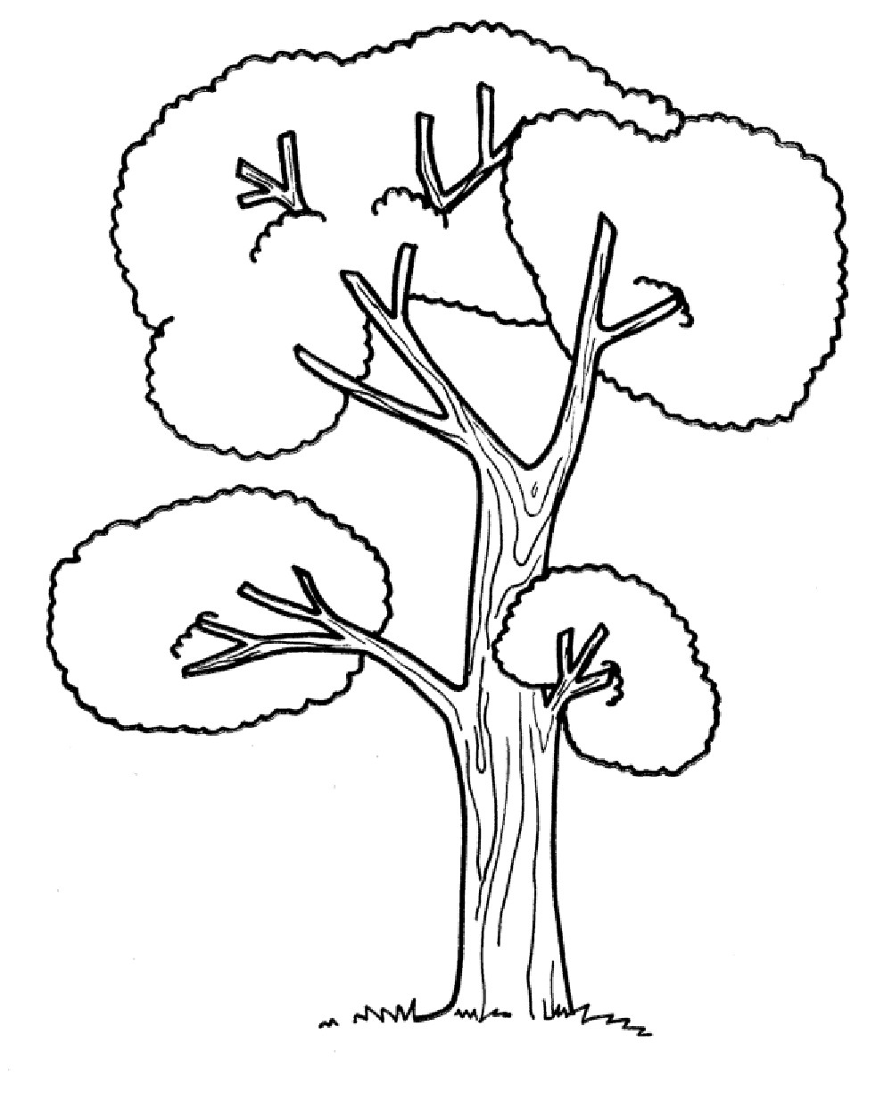 Preschool Coloring Pages Trees Copy Tall Tree Trees Coloring Pages Download Of Noted Coloring Picture A Tree Pages Unknown Resolutions Printable