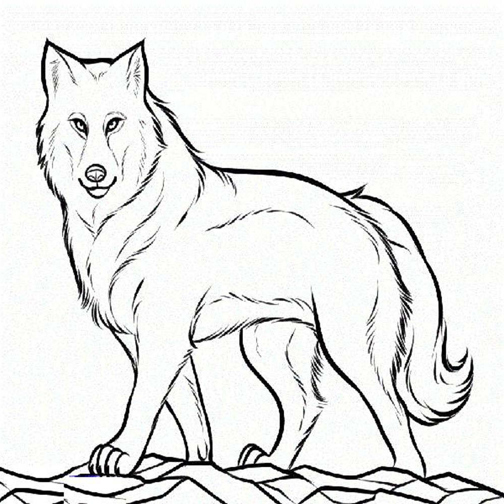 Print & Download Wolf Coloring Pages theme to Print Of Wolves Coloring Pages Wolf Coloring Pages Free Coloring Pages Collection