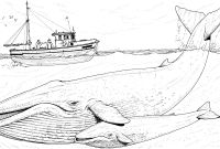 Cartoon Whale Coloring Pages - Printable Baby Whale Image Free Whale Coloring Pages – Fun Time Printable