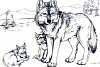 Wolf Coloring Pages Printable - Printable Free Wolf Coloring Pages for Adults Gallery