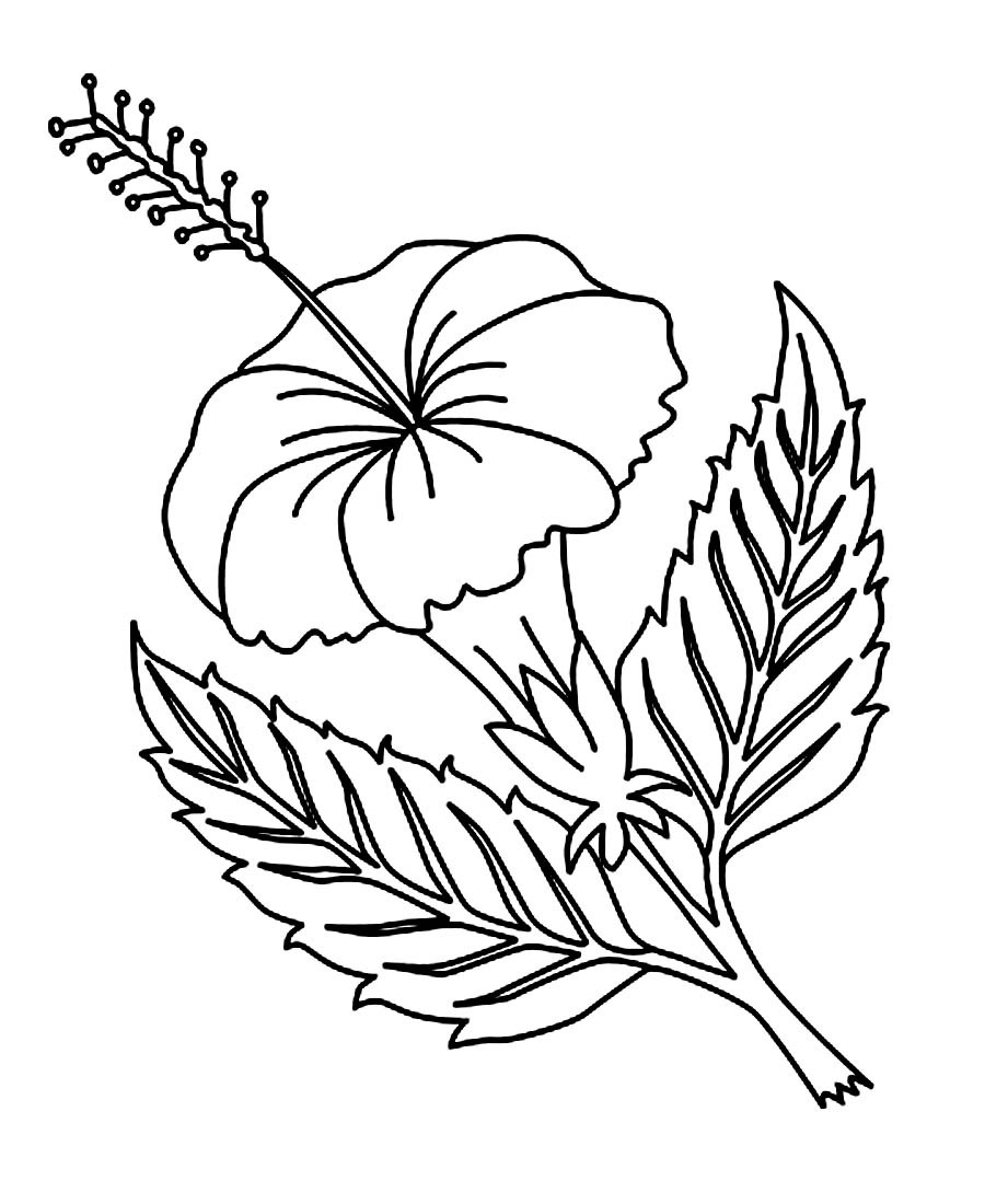 Printable Hibiscus Coloring Pages For Kids Arresting Hawaiian Flower Download Of Hawaii