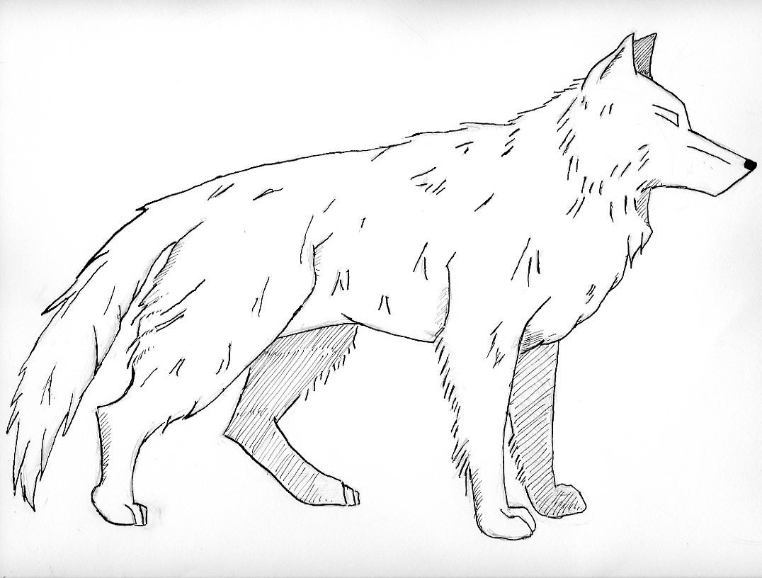 Realistic Wolves Drawing at Getdrawings to Print Of Wolves Coloring Pages Wolf Coloring Pages Free Coloring Pages Collection