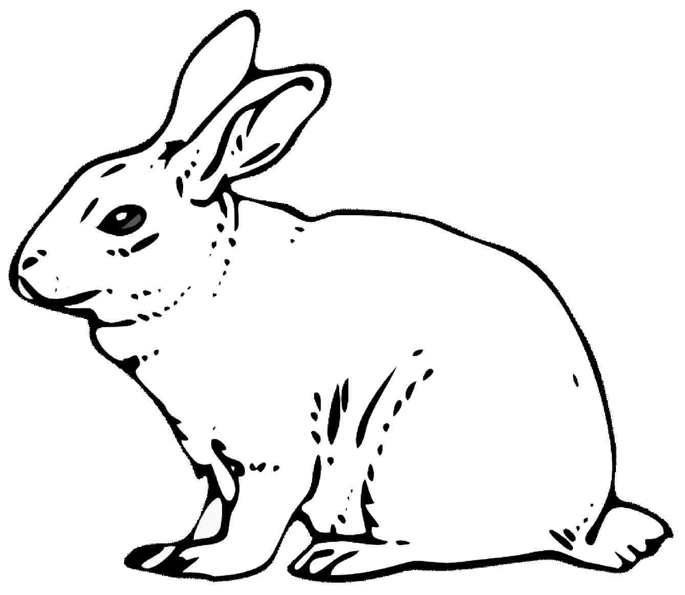 Remarkable Realistic Bunny Coloring Pages Rabb Unknown Download Of Remarkable Realistic Bunny Coloring Pages Rabb Unknown Download