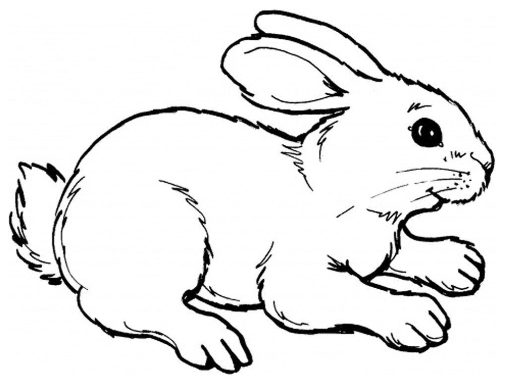 Security Realistic Bunny Coloring Pages Rabbit Unknown to Print Of Remarkable Realistic Bunny Coloring Pages Rabb Unknown Download