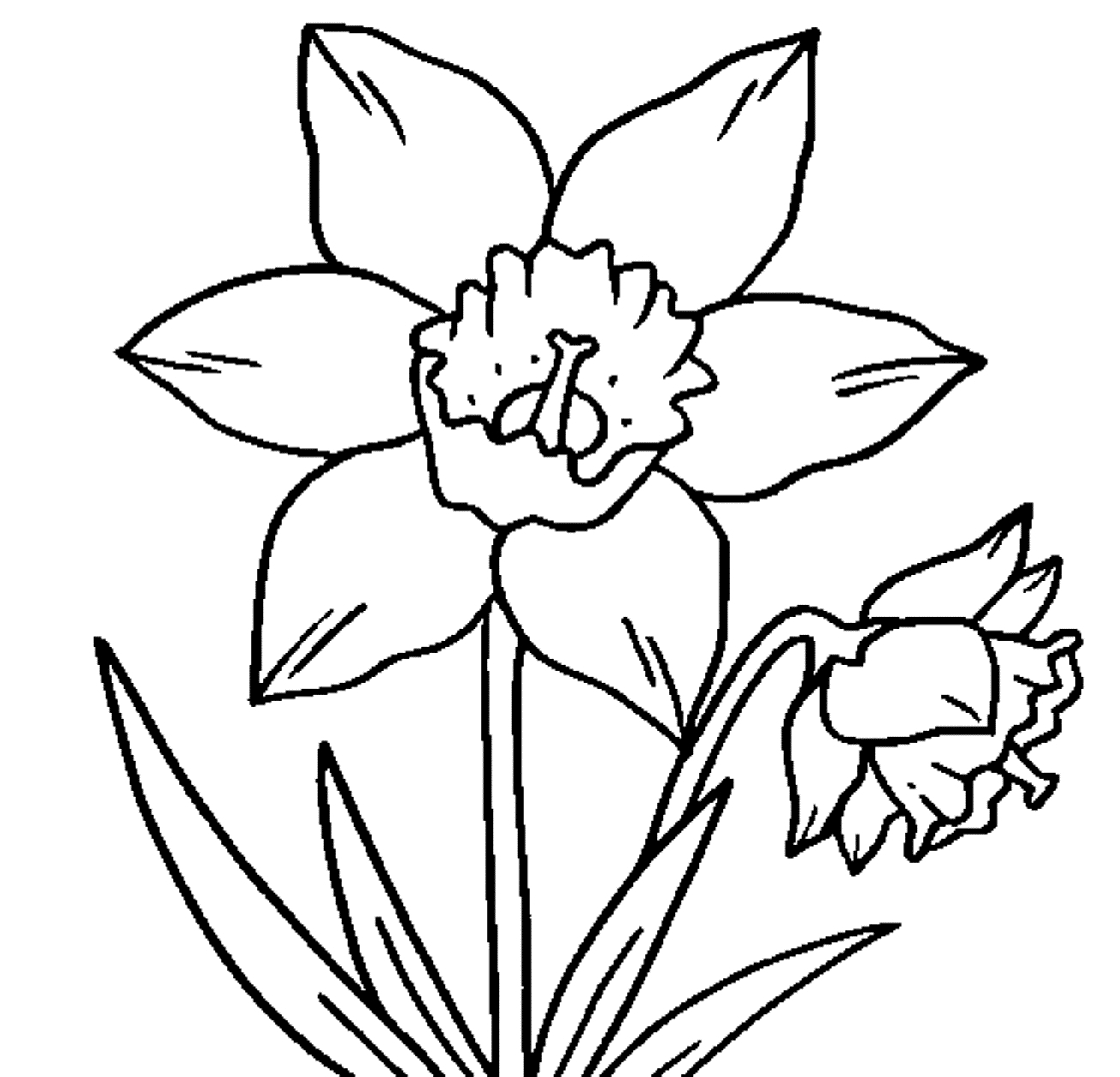Daffodils Coloring Pages to Print 20q - To print for your project