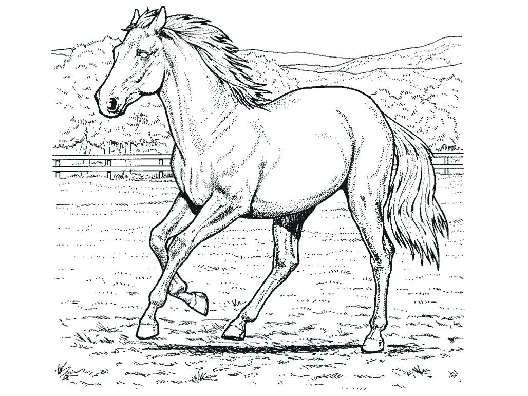 Sturdy Coloring Page A Horse Pages Horses R 3353 Unknown Download Of Horse Detailed Coloring Pages Gallery