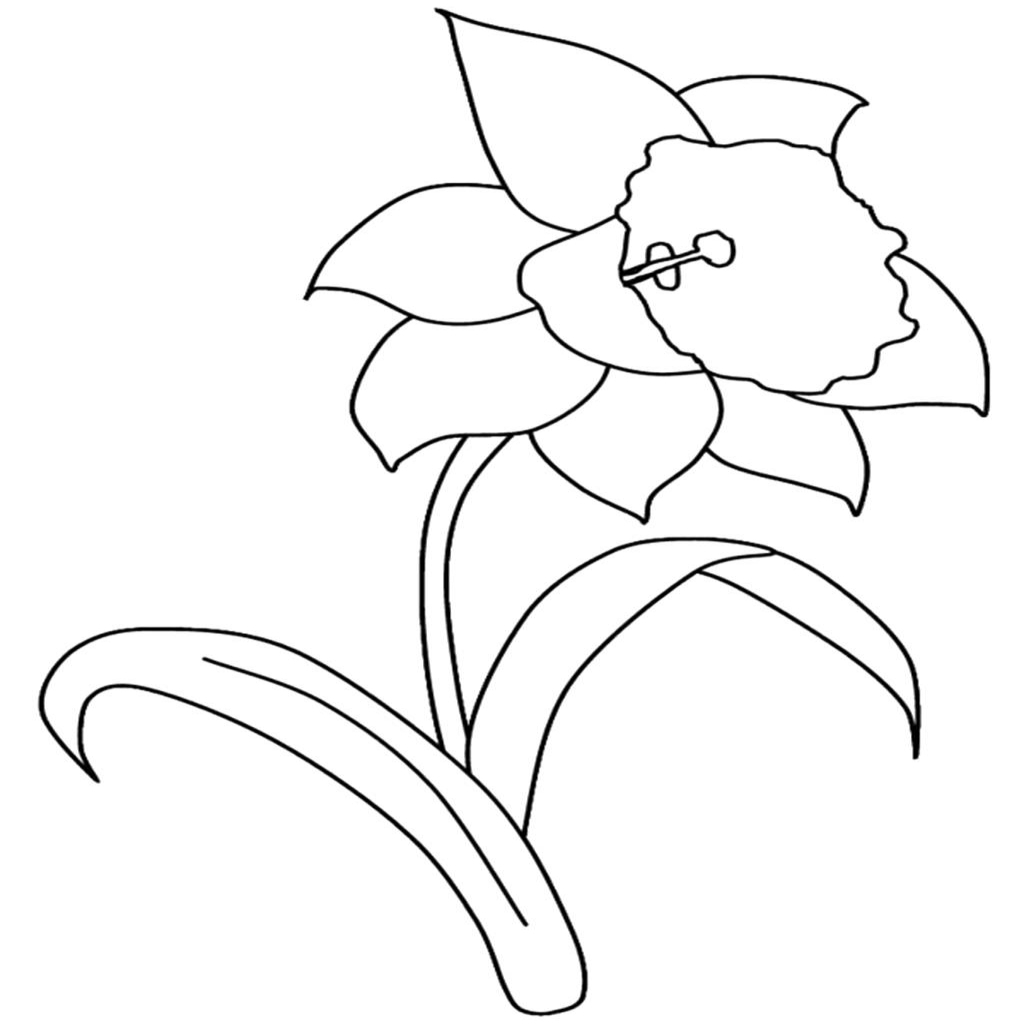 The Yellow Daffodil Coloring Pages to View Printable Version Gallery Of New Daffodil Flower Coloring Pages Collection Printable