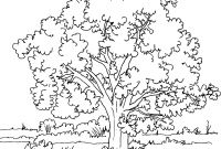 Tree Coloring Pages - Tree Coloring Page Pages Trees Bloodbrothers Me Ribsvigyapan Fee Gallery