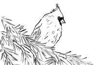Arizona Cardinals Coloring Pages - Unusual Cardinal Coloring Page Excellent Pictu 6623 Unknown to Print