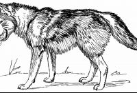 Wolf Coloring Pages Printable - Wolf Coloring Pages Printable Printable Coloring Page Collection