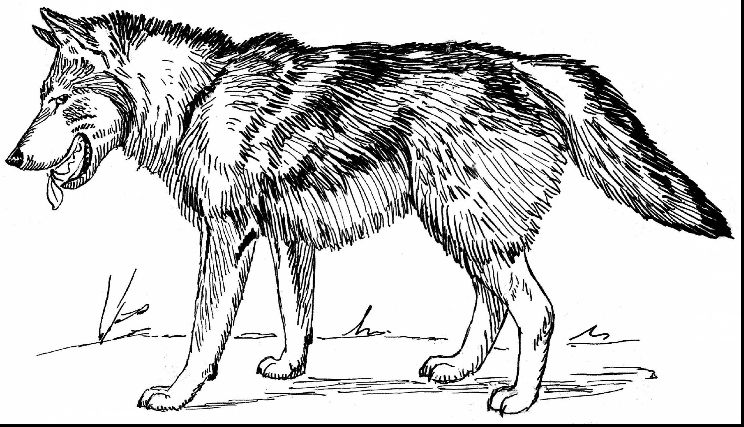 Wolf Coloring Pages Printable Page Collection