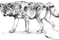 Wolf Coloring Pages Printable - Wolf Coloring Pages Realistic Collection Printable Coloring Pages to Print