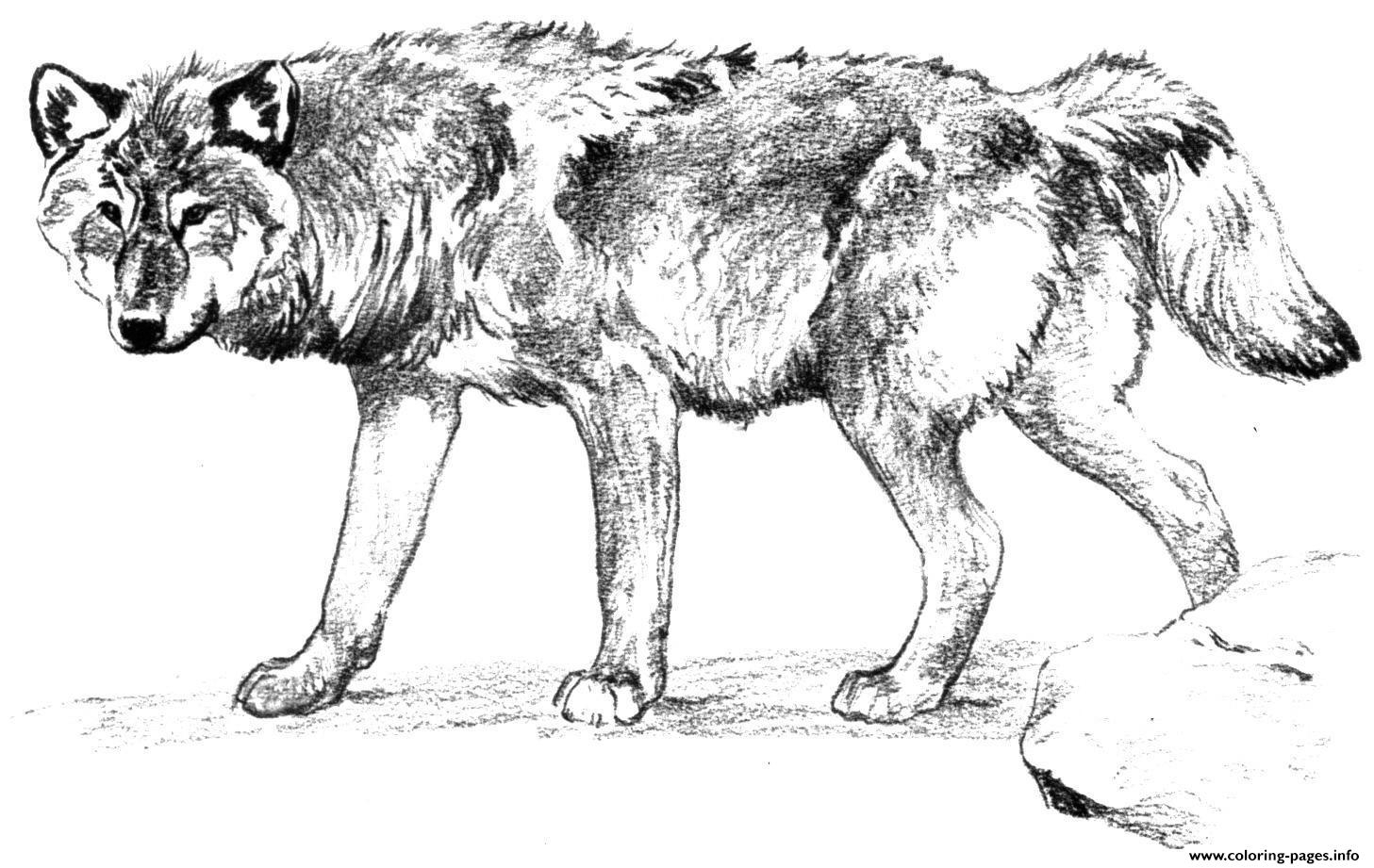 Wolf Coloring Pages Realistic Collection Printable Coloring Pages to Print Of Wolves Coloring Pages Wolf Coloring Pages Free Coloring Pages Collection