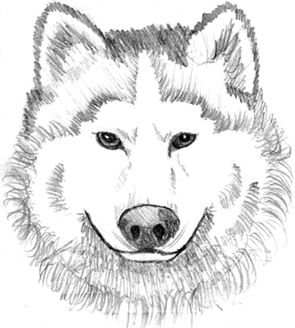Wolf Printable Coloring Pages to Print Of Wolves Coloring Pages Wolf Coloring Pages Free Coloring Pages Collection