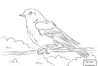 Coloring Pages Birds - Wonderful Idaho State Bird Coloring Page Birds 1019 Unknown Blue to Print