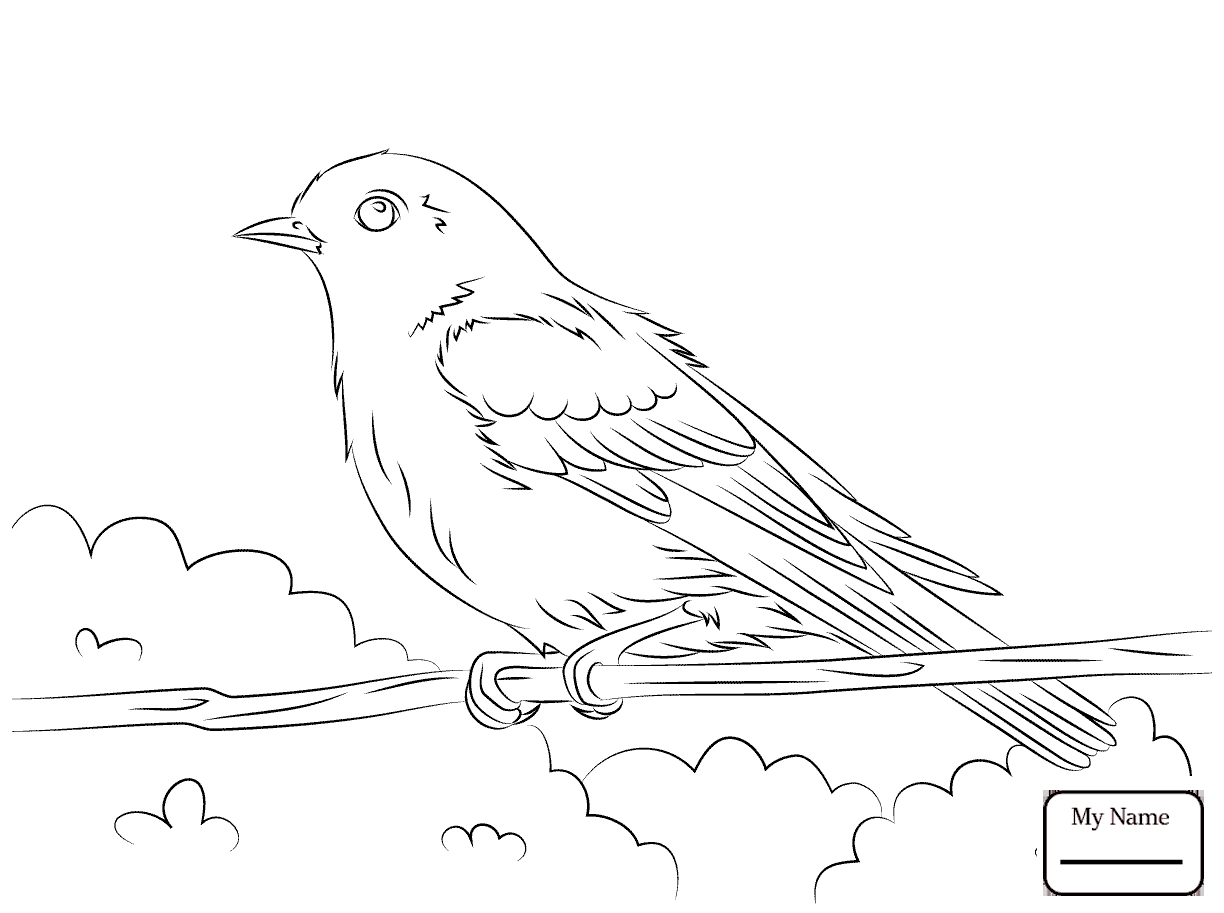 Coloring Pages Birds Collection