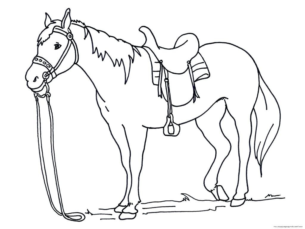 Coloring Pages Free Horse Page Head To Print