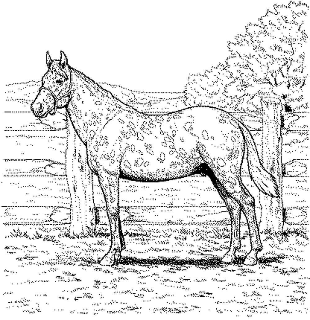 Coloring Pages Free Horse Coloring Pages Page Head Free Horse to ...