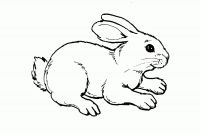 Free Baby Animal Coloring Pages - New Free Baby Animal Coloring Pages Collection Download