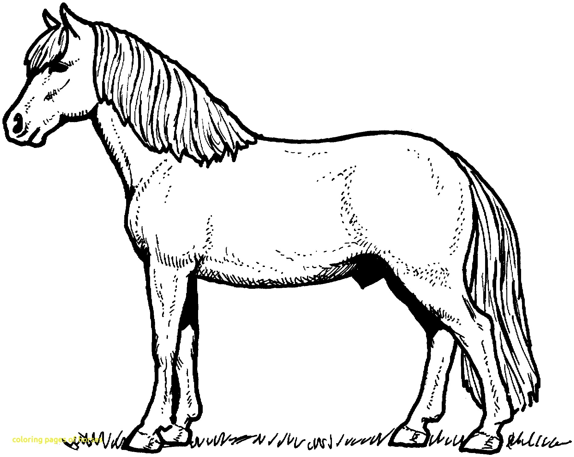 Race Horse Coloring Pages Horses to Print – Free Coloring Sheets