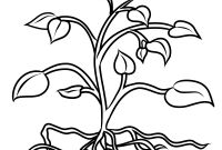 Herbs Coloring Pages - tomato Plant Coloring Page Free Printable Pages New Bertmilne Gallery