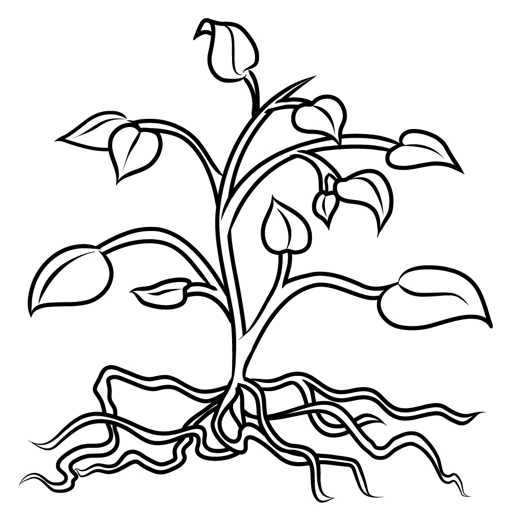 Tomato Plant Coloring Page Free Printable Pages New Bertmilne Gallery Of Blooming Herbs Coloring Page Ultra Coloring Pages Download