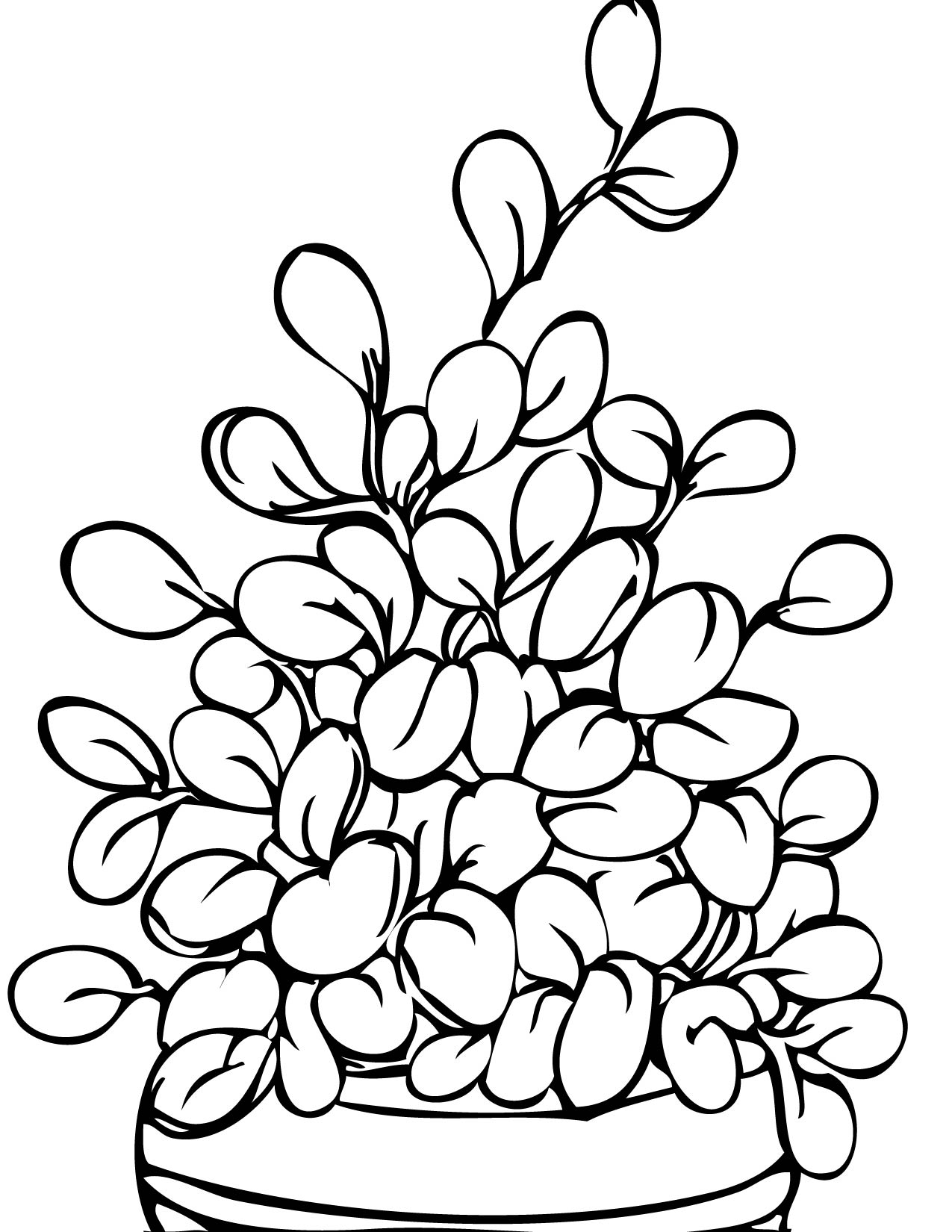 Tomato Plant Coloring Page Free Printable Pages New Bertmilne Printable Of Basil Herb Coloring Page Collection