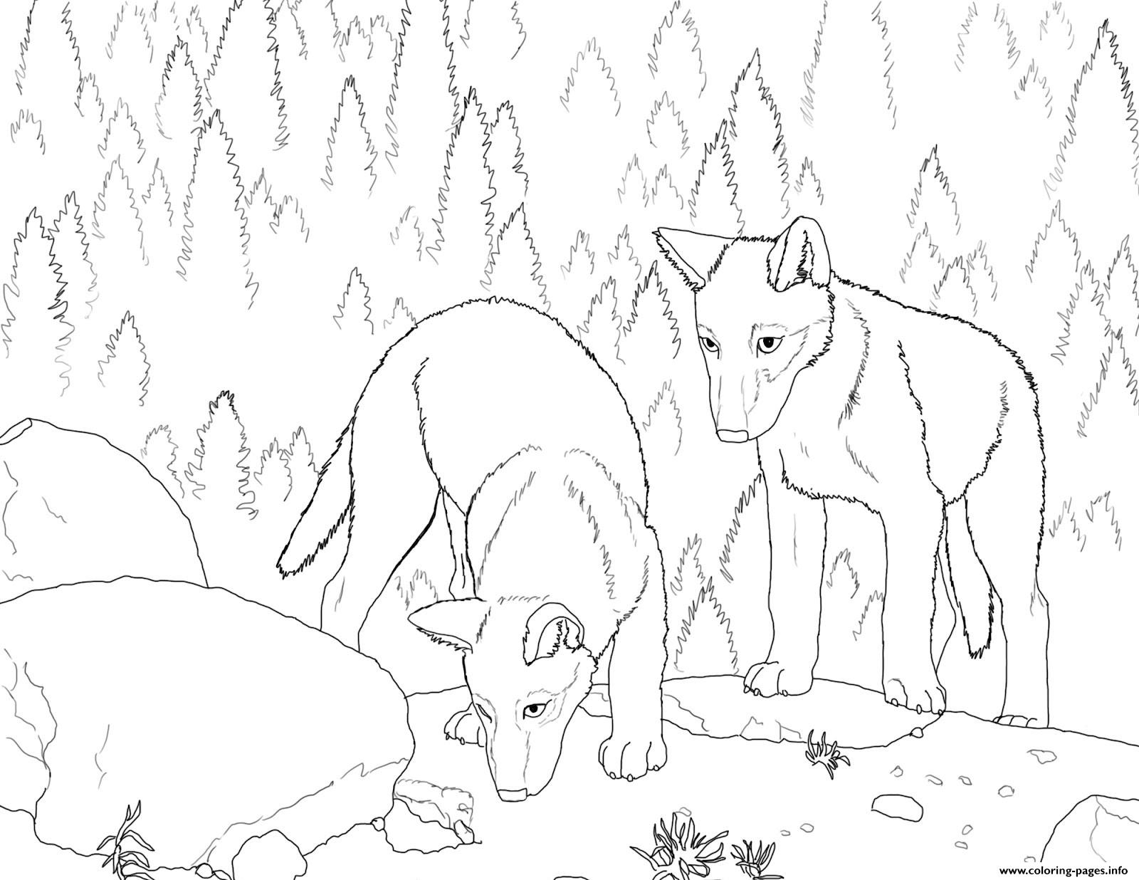 Coloring Pages Wolf Coloring Pages Detailed Drawing Page Cute to ...