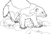 Animal Coloring Pages - Wolverine Animal Coloring Page